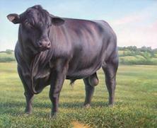 The New Bull... From Bob Williams